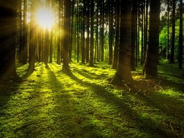 Benefits of Nature, How Nature Can Help You Reduce Stress